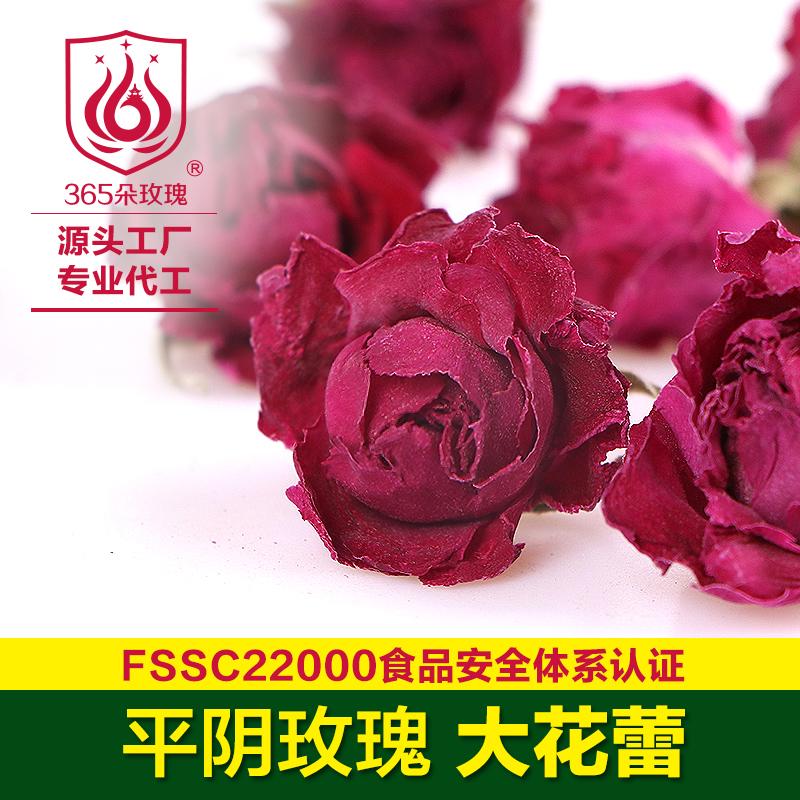 玫瑰大花蕾